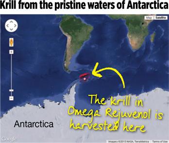 krill-map