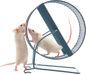 mouse-wheel