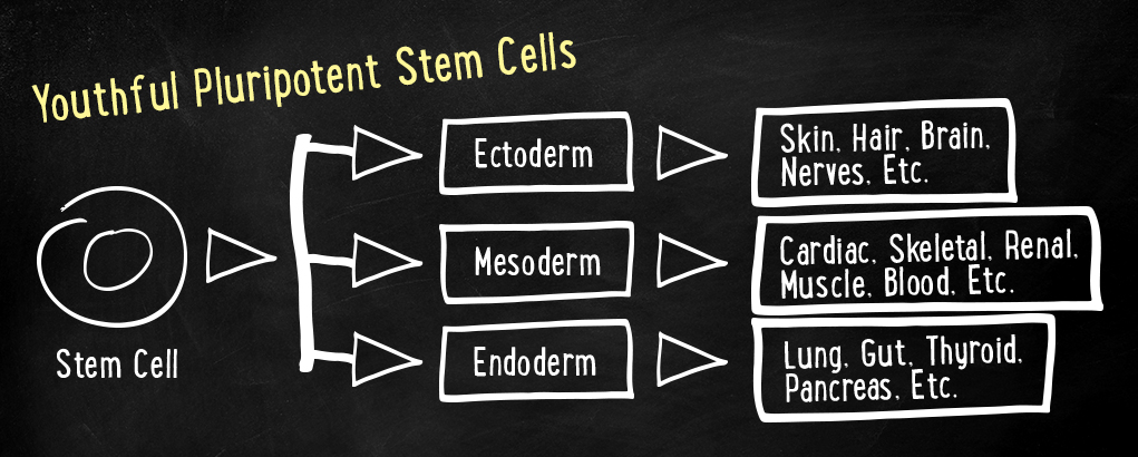 Youthful Pluripotent Stem Cells
